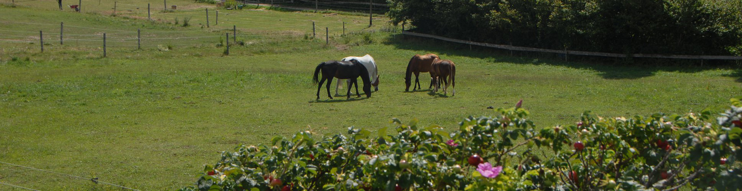 pension chevaux essertines-sur-rolle les dudes