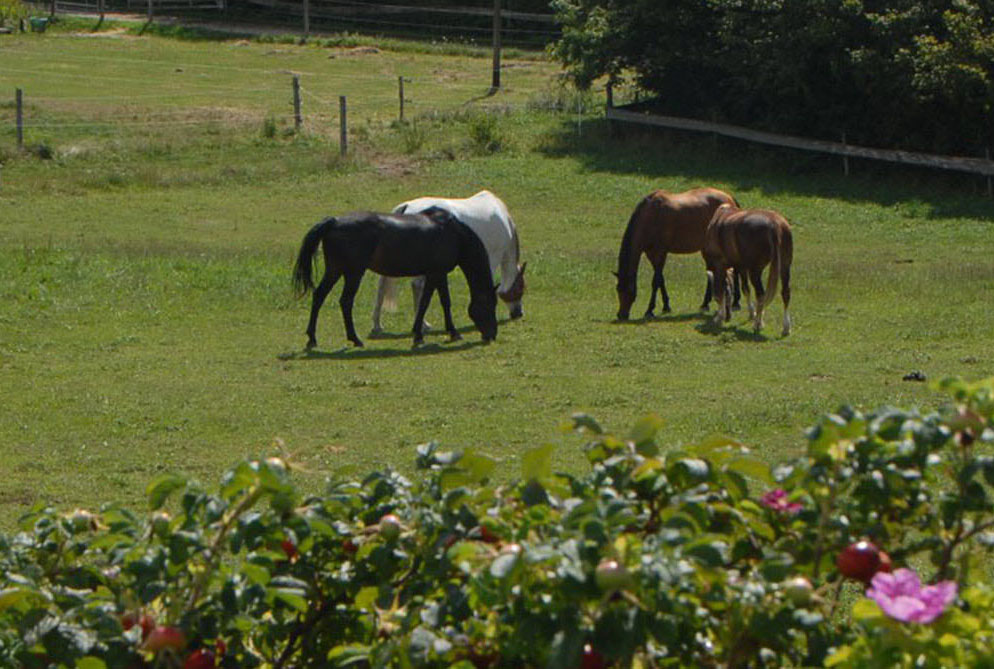 pension chevaux essertines-sur-rolle les dudes parelli